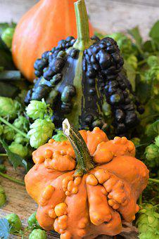 Pumpkins, Ornamental Pumpkin, Colorful, Autumn