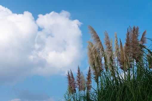 Cloud, Cumulus, White Cloud, Blue Sky, Sunny Days