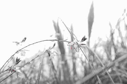 Black And White, Flowers, Background, Macro, Memories