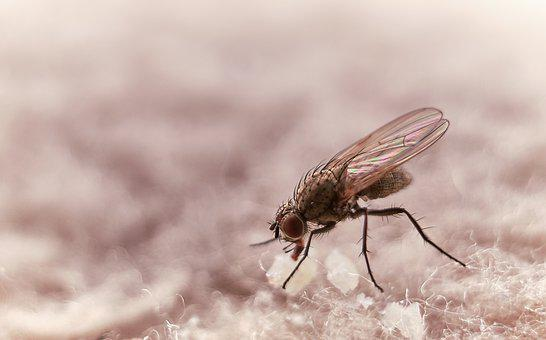 Fly, Close Up, Insect, Wing, Macro, Compound Eyes, Legs