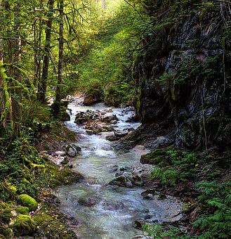 Stream, Gorge, Forest, Nature, Water, River, Torrent