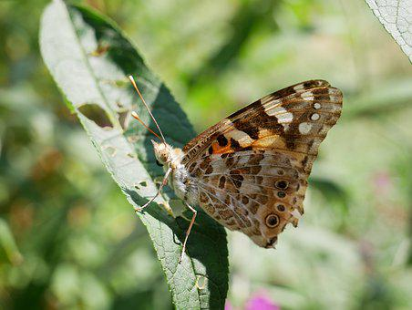 Butterfly, Sheet, Nature, Insect, Animal, Spring, Green
