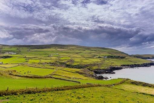 Ireland, Reported, Nature, Meadow, Green, Landscape