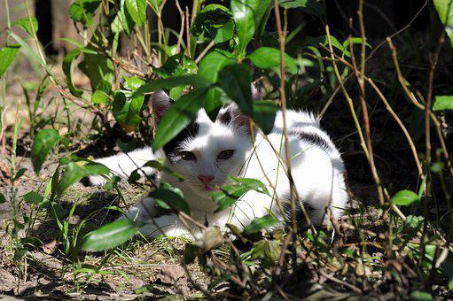 Animal, Bushes, Cat, Kitty, Black And White, Domestic