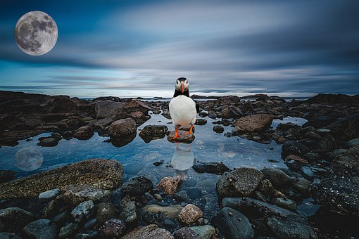Sea, Rocks, Water, Sky, Evening, Clouds, Penguin, Moon