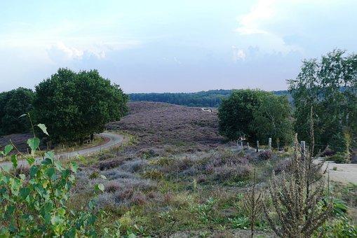 The Blooming Heather, Heide, Posbank, Arnhem, Nature