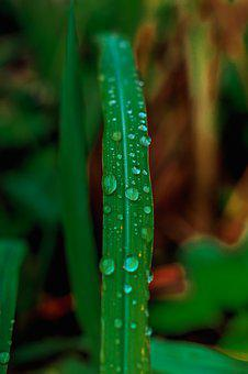 Blade, Drops Of Water, Nature, Drops, Water, Plant