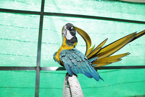 Parrots Care For Tail Feathers, Beautiful Macaws