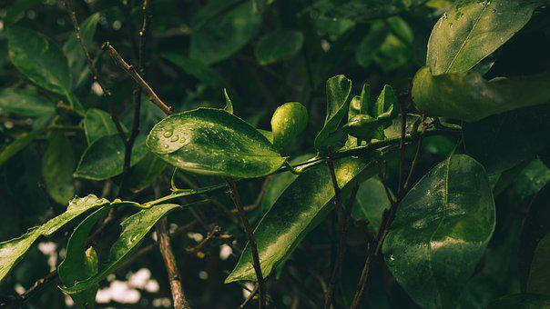 Green, Flora, Nature, Plant, Texture, Bokeh, Fresh