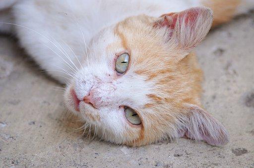 Cat, Orange, Head, Eyes, Portrait, Kitty, Animal