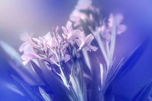 Flowers, Nature, Plant, Garden, Pink, Purple, Romantic