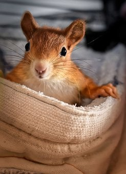Squirrel, Young Animal, Small, Young, Cute, Rodent