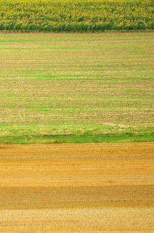 Field, Sunflower, Hay, Straw, Design, Nature, Yellow