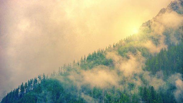 Ridge, Coniferous Forest, Fog, Sun, Clouds, Alpine