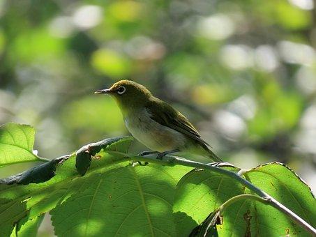 Animal, Forest, Green, Bird, Wild Birds