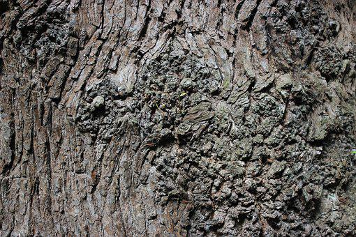 Bark, Tree, Brown, Texture, Forest, Wood