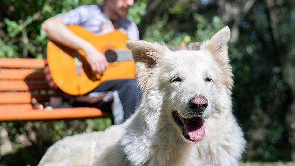 Guitar, Dog, Sol, Afternoon, Nature, Animal, Beautiful