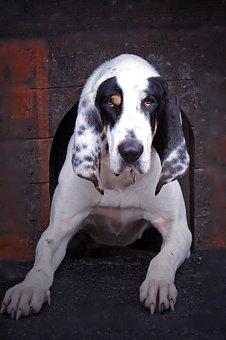 Dog, Dog Kennel, Animal, Paw, Snout, Fur