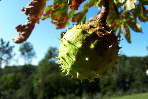 Autumn, Nature, Chestnut, Tree, Leaves, Autumn Mood