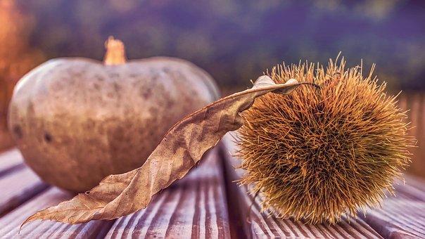 Autumn, Chestnut, Pumpkin, Autumn Mood, Igelig, Prickly