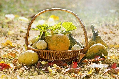 Basket, Pumpkin, Decorative, Autumn, Harvest