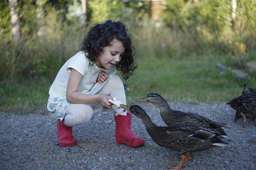 Duck, Girl, Baby, Beauty, Feeding, Bread, Animals