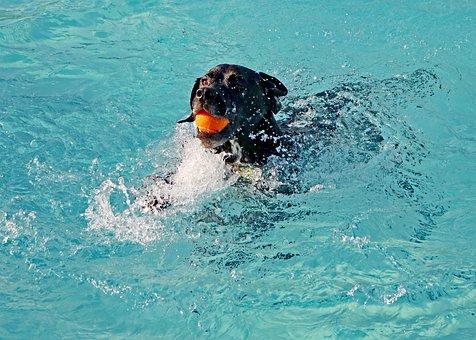 Dog, Water, Pet, Summer, Swim, Pool, Fun, Canine, Play