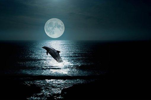Landscape, Sea, Sky, Night, Dolphin, Moon, Clouds