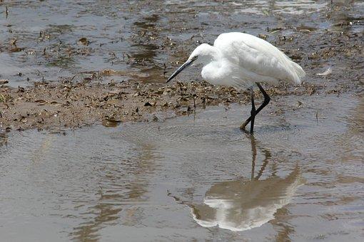Bird, Reflection, White, Wade, Water, Drinking, Hole
