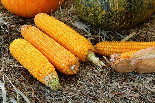 Corn, Vegetables, Harvest, Food, Eating, Fresh