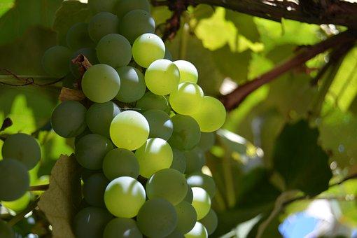 Grapes, Green, Vine, Meal, Fruit, Nature