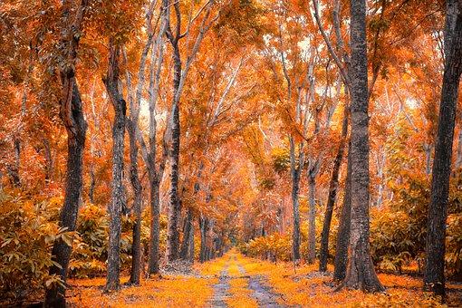 Cedar, Forest, Nature, Leaves, Tree, Light, Scenic