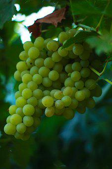 Grapes, Berry, Healthy, Nutrition, Green, Loza, Wine