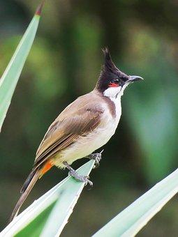 Bird, Plant, Animal, Wildlife, Wild, Close-up