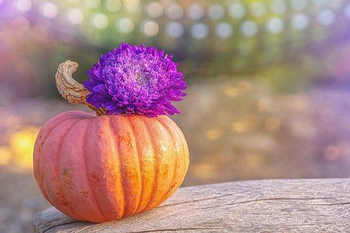 Autumn, Pumpkin, Color, Colorful, Decoration, Harvest