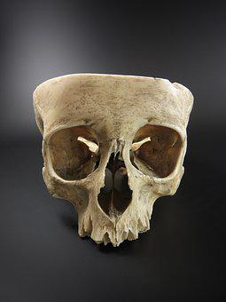 Skull, Human Skull, Exhibit, On A Black Background