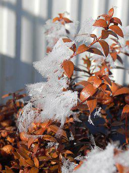 Frost, Nature, Winter, Ice, Snow, Icy, Leaves, Frosty