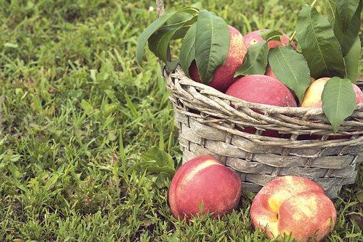 Food, Green, Fresh, Nectarine, Basket, Nature, Fruit