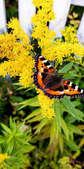 Butterfly, Summer, Yellow, Beautiful, Colourful