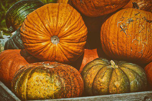 Pumpkins, Colorful, Autumn, Decoration