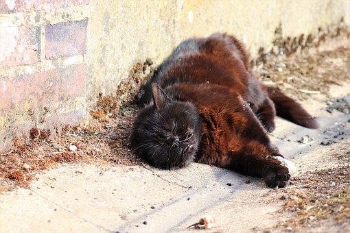 Cats, Felines, Mammals, Animals, Whiskers, Fur, Cute
