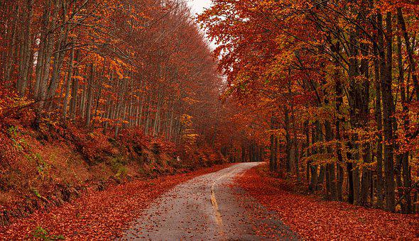 Fall, Autumn, Fantasy, Forest, Road, Greece, Kastoria