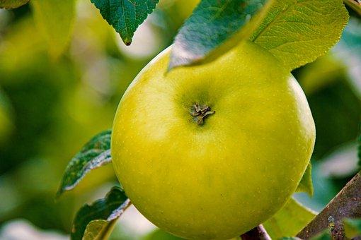 Apple, Green, Fruit, Pome Fruit, Fresh, Healthy
