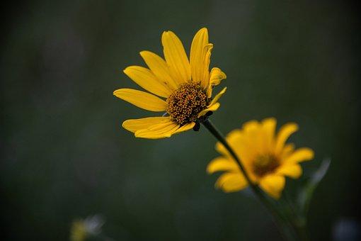 Flower, Yellow, Blossom, Petal, Garden, Summer, Fresh