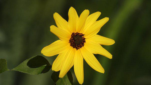 Blossom, Bloom, Yellow, Flower, Summer, Nature, Garden