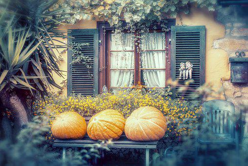Autumn, Pumpkin, Halloween, Harvest, Decoration, Orange