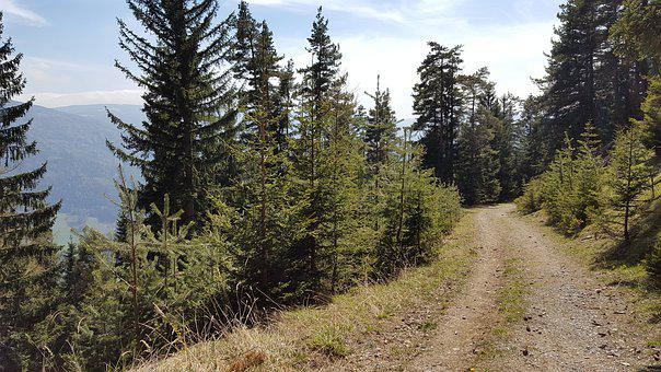 Away, Trees, Forest, Nature, Hiking, Trail