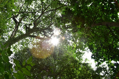 Nature, Tree, Sunshine, Green, Sun, Forest, Light
