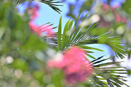 Floral Scene, Palm, Frond, Leaves, Pastel, Flowers