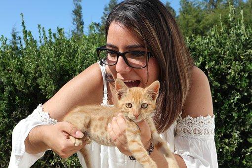 Cat, Cute, Kitten, Portugal, Pet